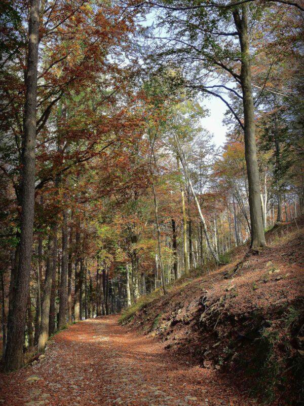 10.-Settembre-Passeggiare-nel-Parco-del-Valentino